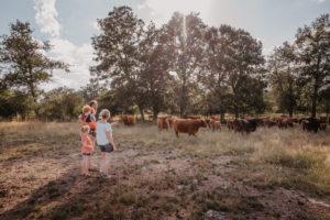 Le Domaine de Bellecour, les vaches Highland dans les prés